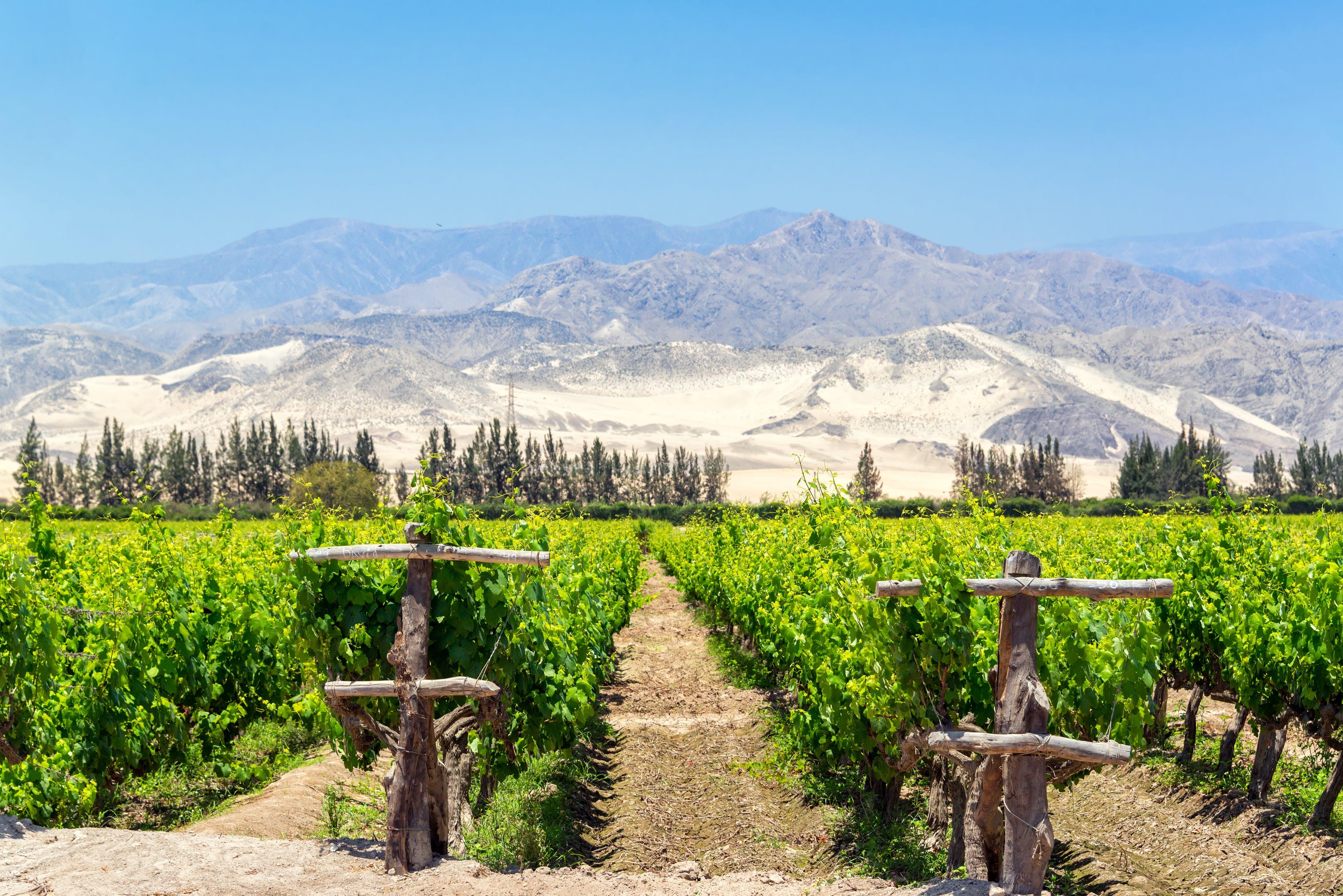 Bij Ica vind je de oudste wijngaarden van Peru